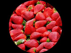 frische regionale Erdbeeren selbst pflücken oder pflückfrisch kaufen bei Erdbeeren Holzner