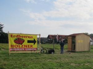 Erdbeeren Holzner - Erdbeerfeld Mainburg