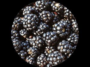 frische regionale Brombeeren - direkt bei Erdbeeren Holzner kaufen