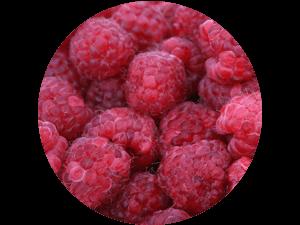 frische Himbeeren bei Erdbeeren Holzner selbst pflücken und kaufen