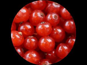 frische regionale Johannisbeeren bei Erdbeeren Holzner selbst pflücken und kaufen