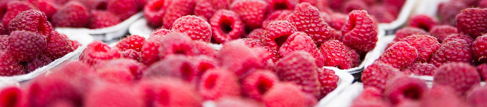 Erdbeeren Holzner - Unsere Beeren: frische Himbeeren direkt vom Feld