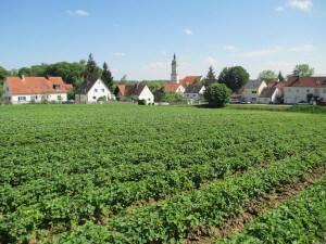 Erdbeeren Holzner - Erdbeerfeld Freising/Neustift
