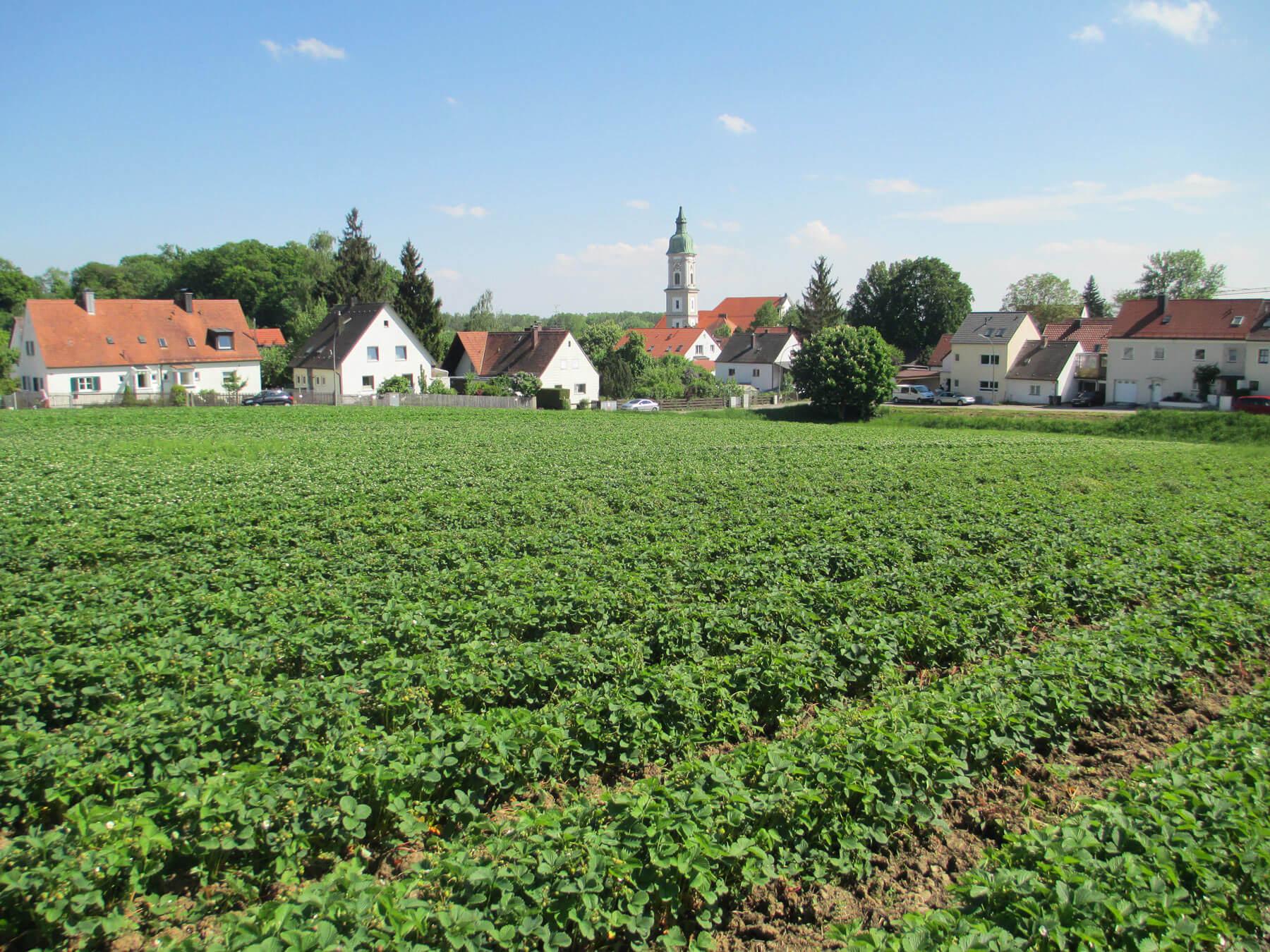 Unser Erdbeerfeld - Erdbeeren Holzner in Freising / Neustift