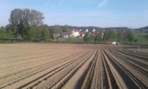 Erdbeeren Holzner - Erdbeerfeld Unterweilbach - ehemals Frantz Erdbeeren